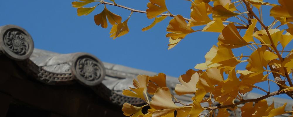 Денежное дерево, которое украшает все корейские улицы